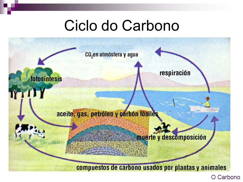 Ciclo do Carbono O Carbono