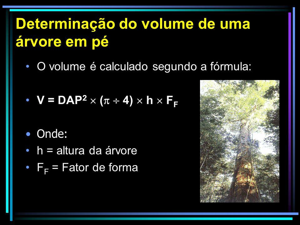 Determinação do volume de uma árvore em pé