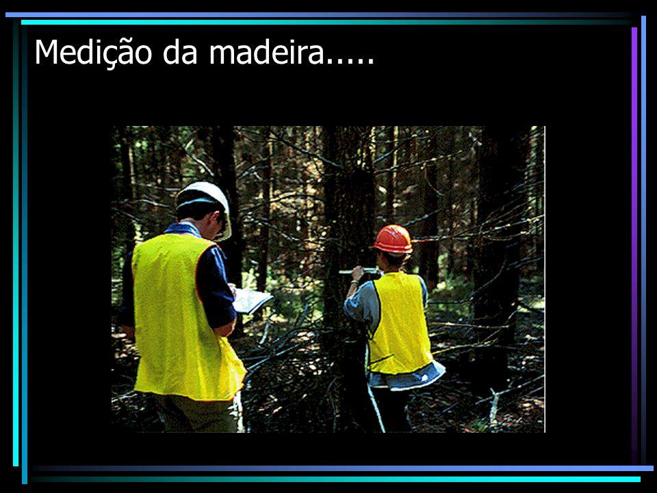Medição da madeira.....