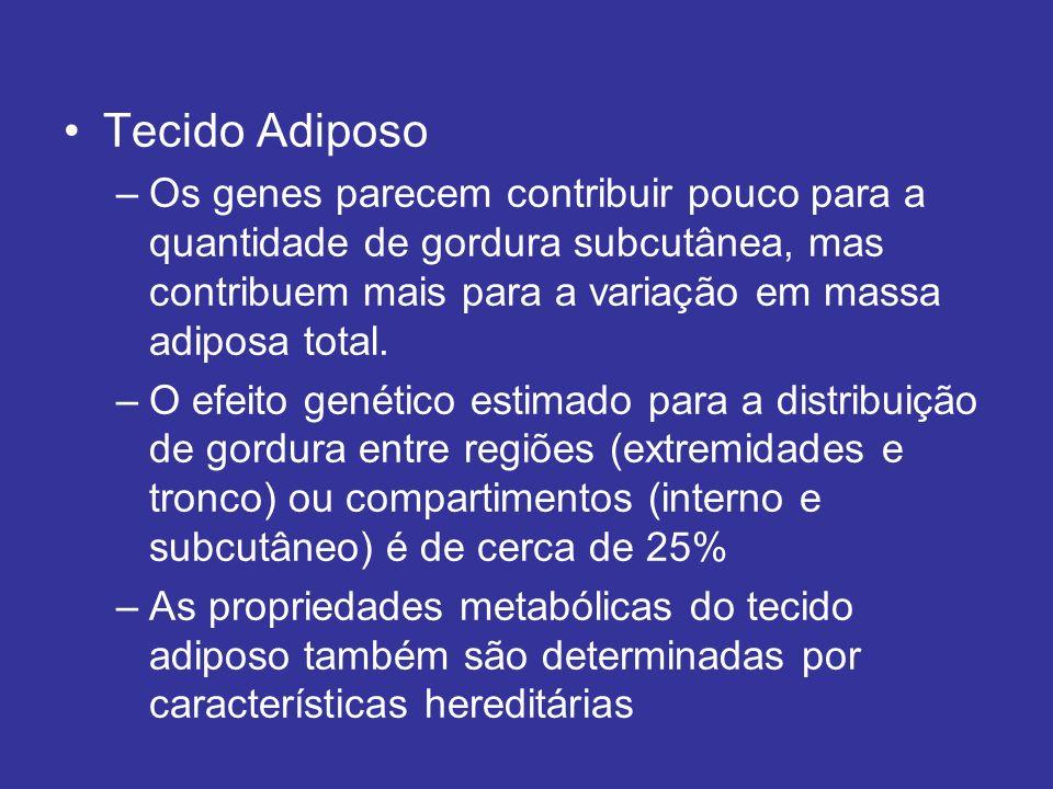 Tecido Adiposo Os genes parecem contribuir pouco para a quantidade de gordura subcutânea, mas contribuem mais para a variação em massa adiposa total.