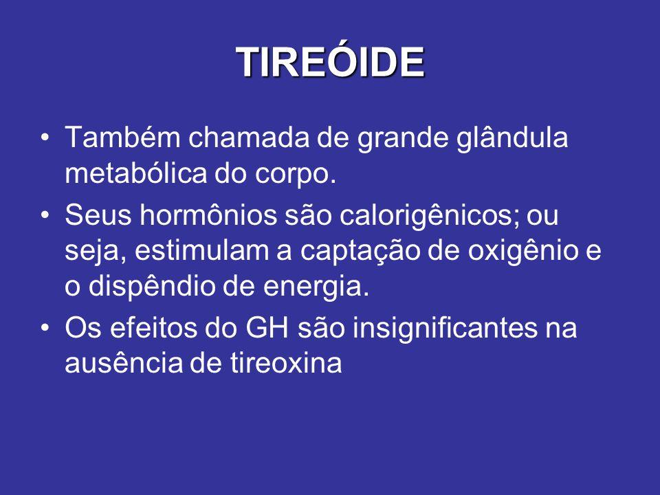 TIREÓIDE Também chamada de grande glândula metabólica do corpo.