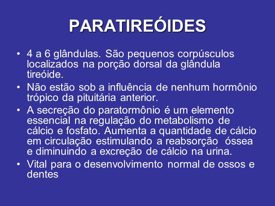 PARATIREÓIDES 4 a 6 glândulas. São pequenos corpúsculos localizados na porção dorsal da glândula tireóide.
