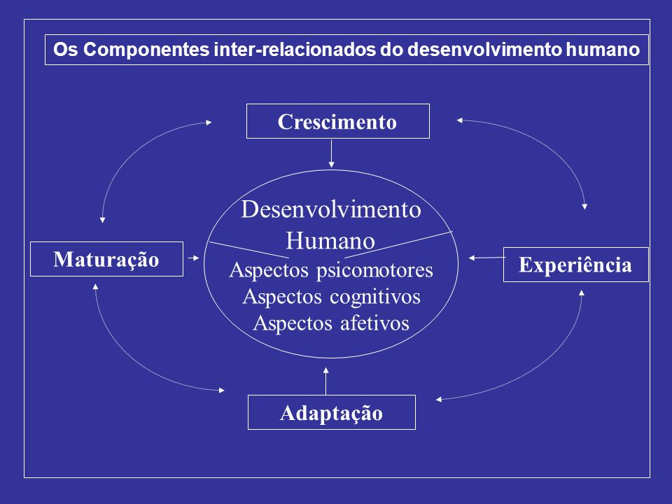 Os Componentes inter-relacionados do desenvolvimento humano