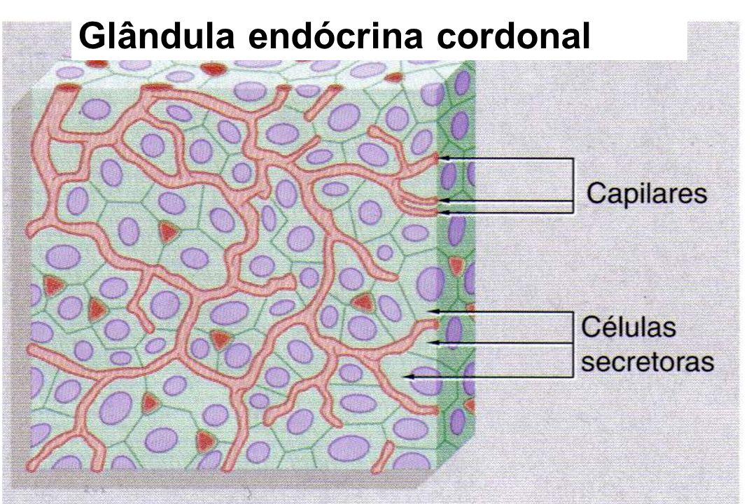 Glândula endócrina cordonal