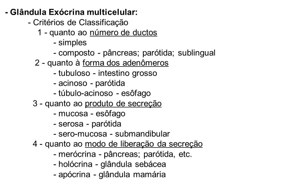 - Glândula Exócrina multicelular:. - Critérios de Classificação