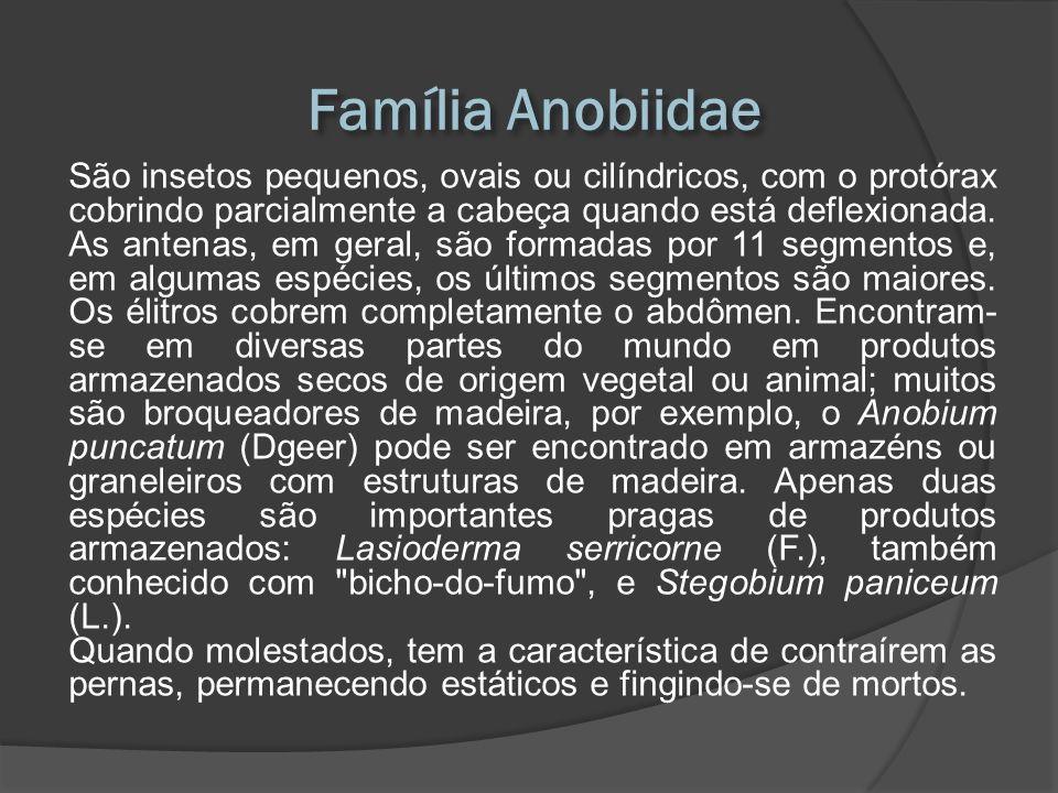 Família Anobiidae