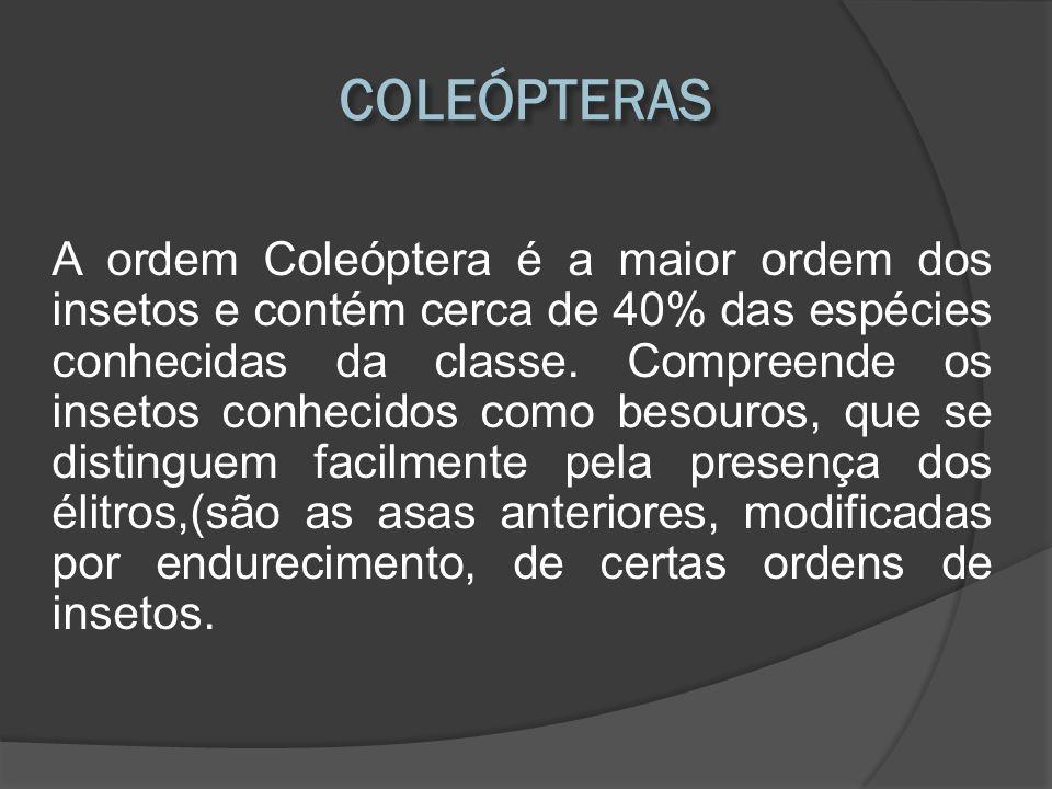 COLEÓPTERAS