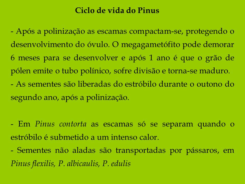Ciclo de vida do Pinus