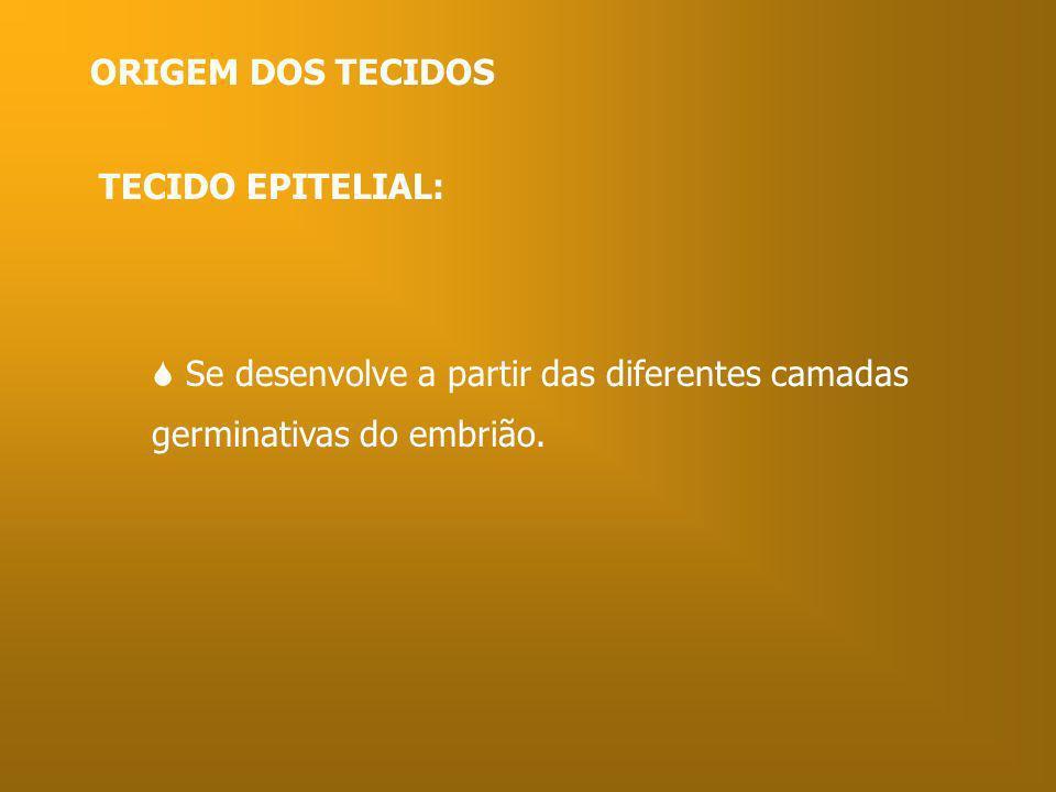 ORIGEM DOS TECIDOSTECIDO EPITELIAL:  Se desenvolve a partir das diferentes camadas germinativas do embrião.