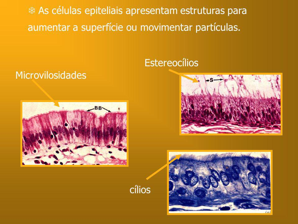  As células epiteliais apresentam estruturas para aumentar a superfície ou movimentar partículas.