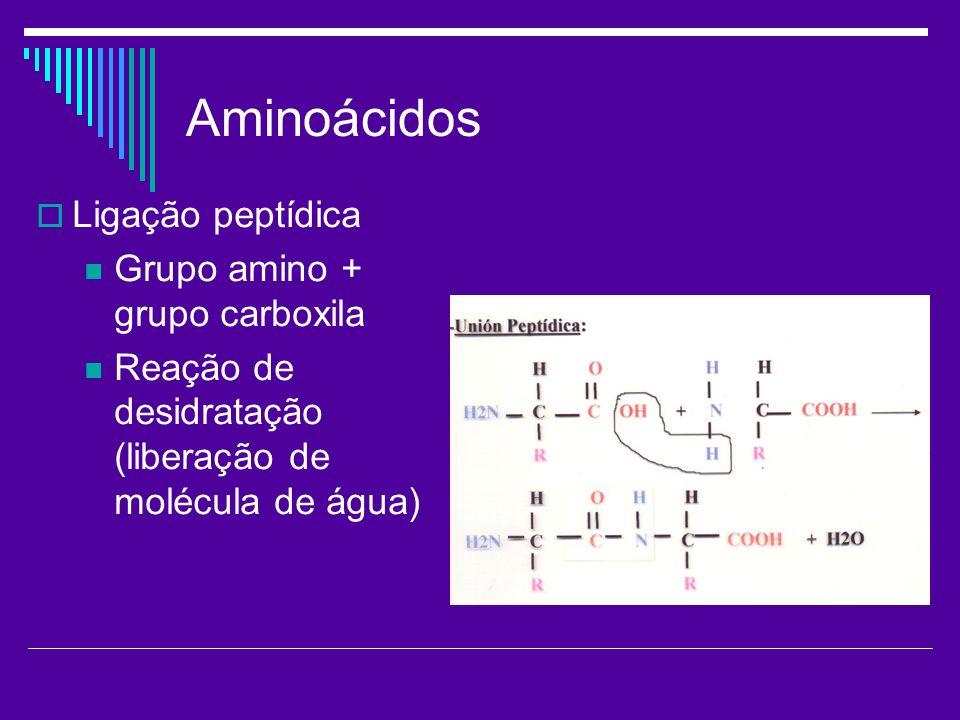 Aminoácidos Ligação peptídica Grupo amino + grupo carboxila