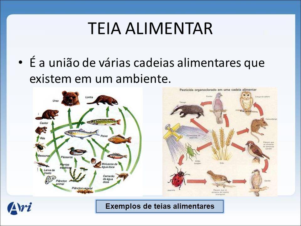 Teia Alimentar Exemplos Cadeias E Teias Alimentares Kit