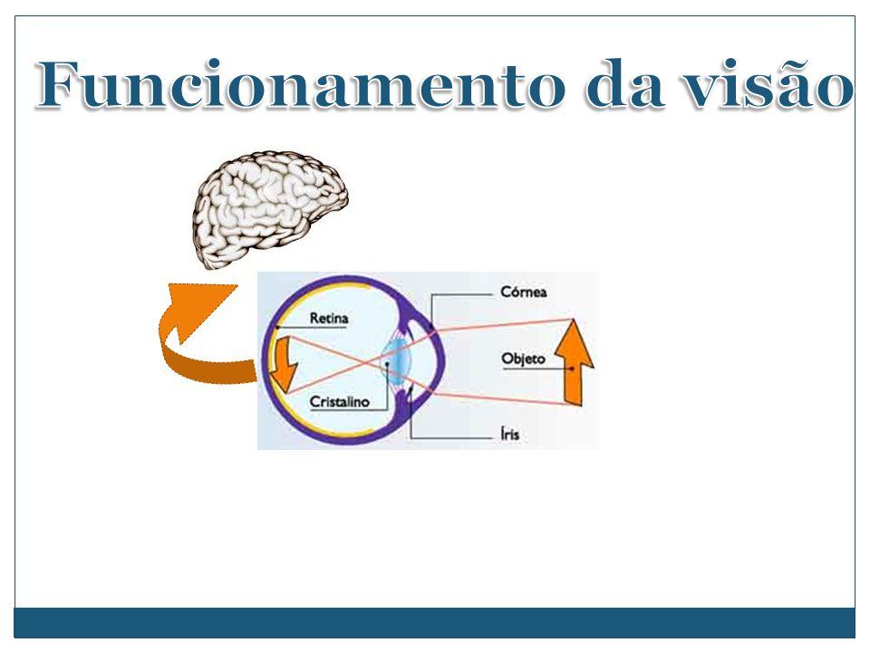 Funcionamento da visão