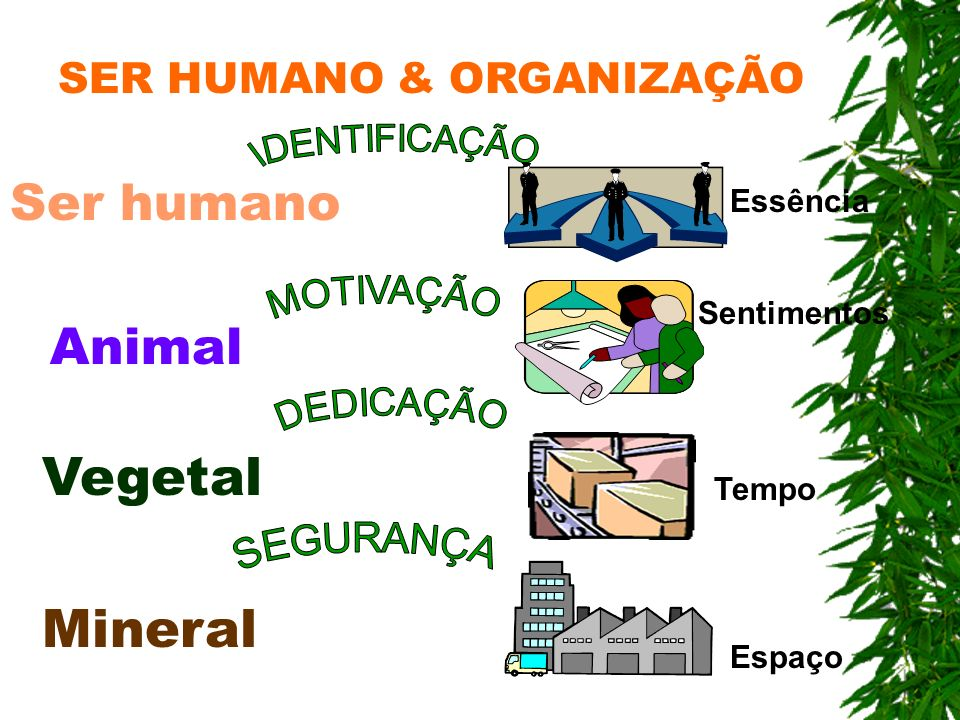 Vegetal Mineral Ser humano Animal SER HUMANO & ORGANIZAÇÃO