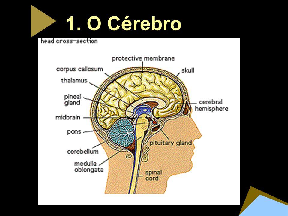 1. O Cérebro