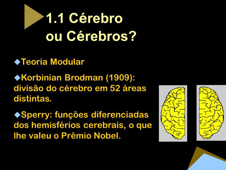 1.1 Cérebro ou Cérebros Teoria Modular