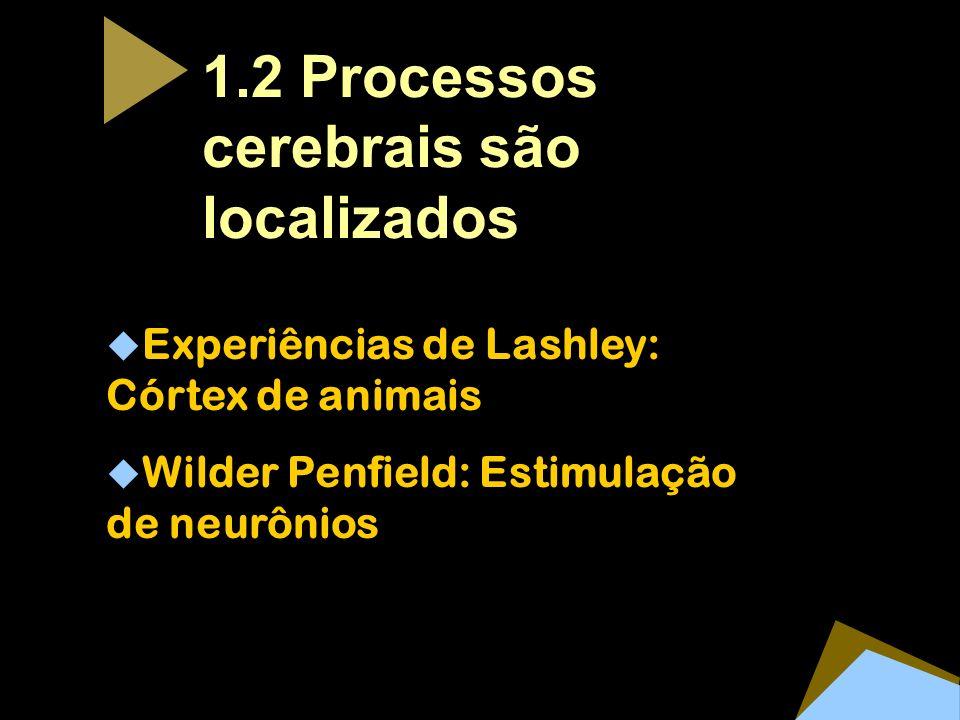 1.2 Processos cerebrais são localizados
