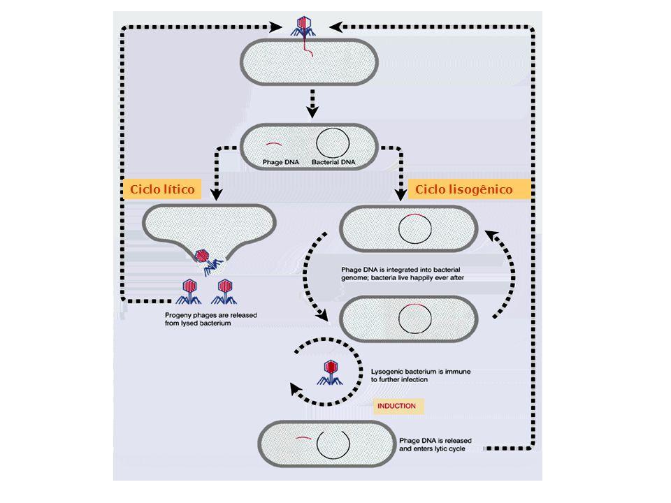 genes vii benjamin lewin pdf