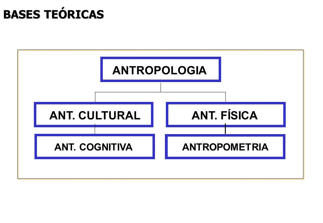 BASES TEÓRICAS ANT. CULTURAL ANT. FÍSICA ANTROPOLOGIA ANT. COGNITIVA