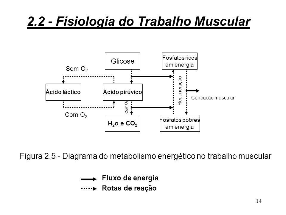 Figura 2.5 - Diagrama do metabolismo energético no trabalho muscular