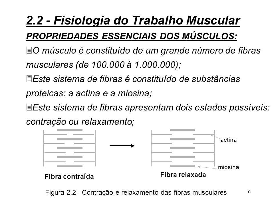 Figura 2.2 - Contração e relaxamento das fibras musculares