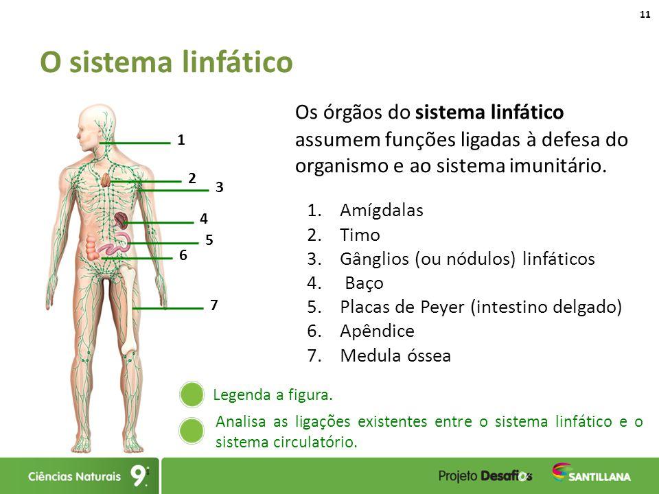Asombroso Cuadro Del Sistema Linfático Elaboración - Anatomía de Las ...