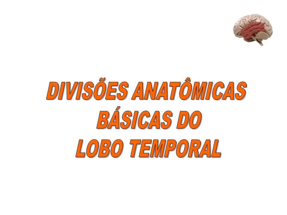 DIVISÕES ANATÔMICAS BÁSICAS DO LOBO TEMPORAL