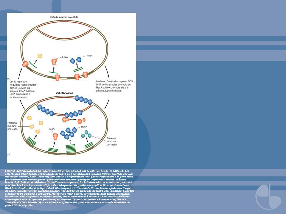 FIGURA 4. 33 Regulação do reparo do DNA e recuperação em E