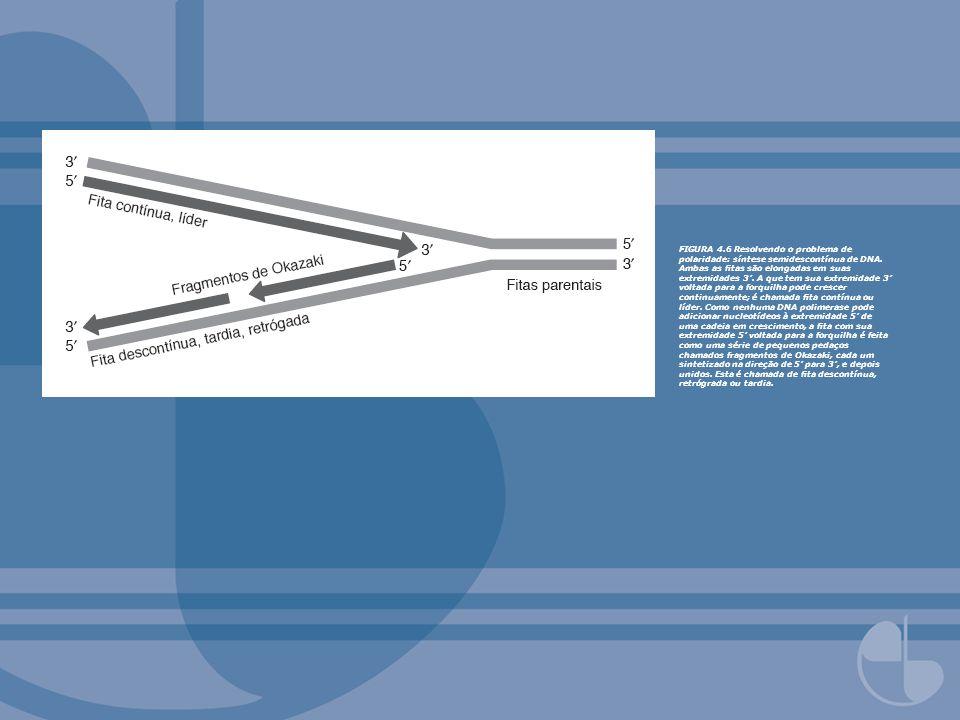 FIGURA 4.6 Resolvendo o problema de polaridade: síntese semidescontínua de DNA.
