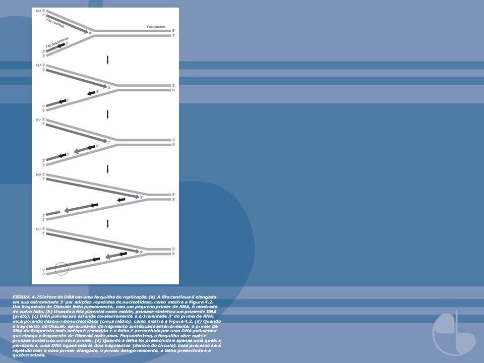 FIGURA 4. 7Síntese de DNA em uma forquilha de replicação