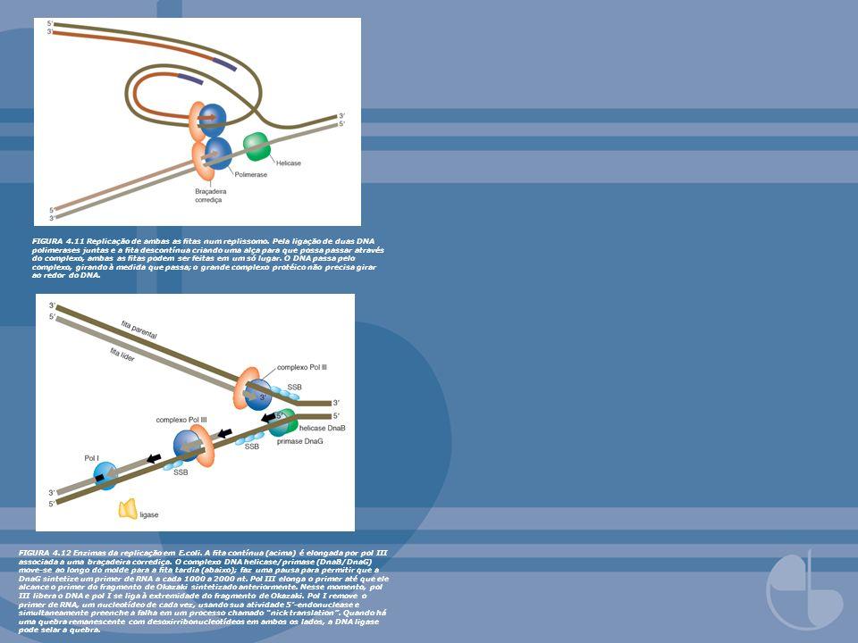 FIGURA 4. 11 Replicação de ambas as fitas num replissomo