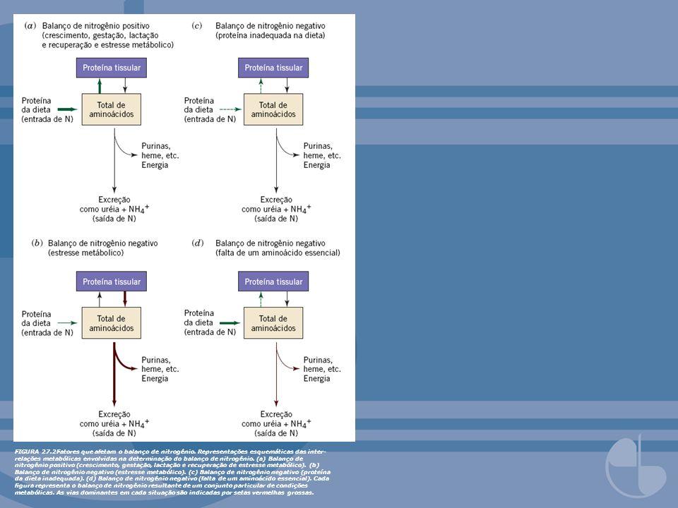 FIGURA 27. 2Fatores que afetam o balanço de nitrogênio