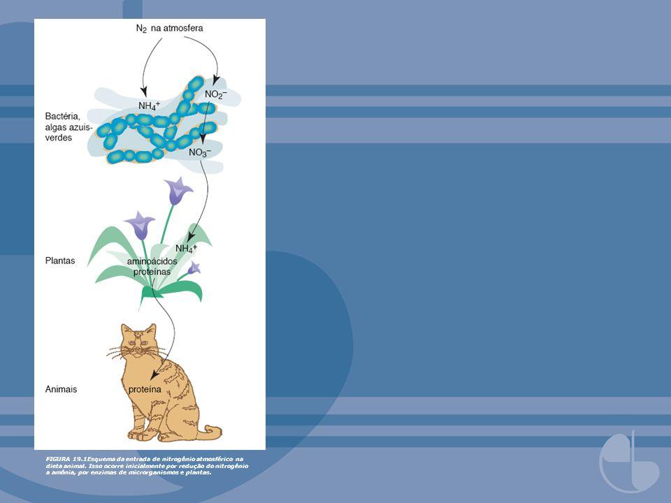 FIGURA 19.1Esquema da entrada de nitrogênio atmosférico na dieta animal.