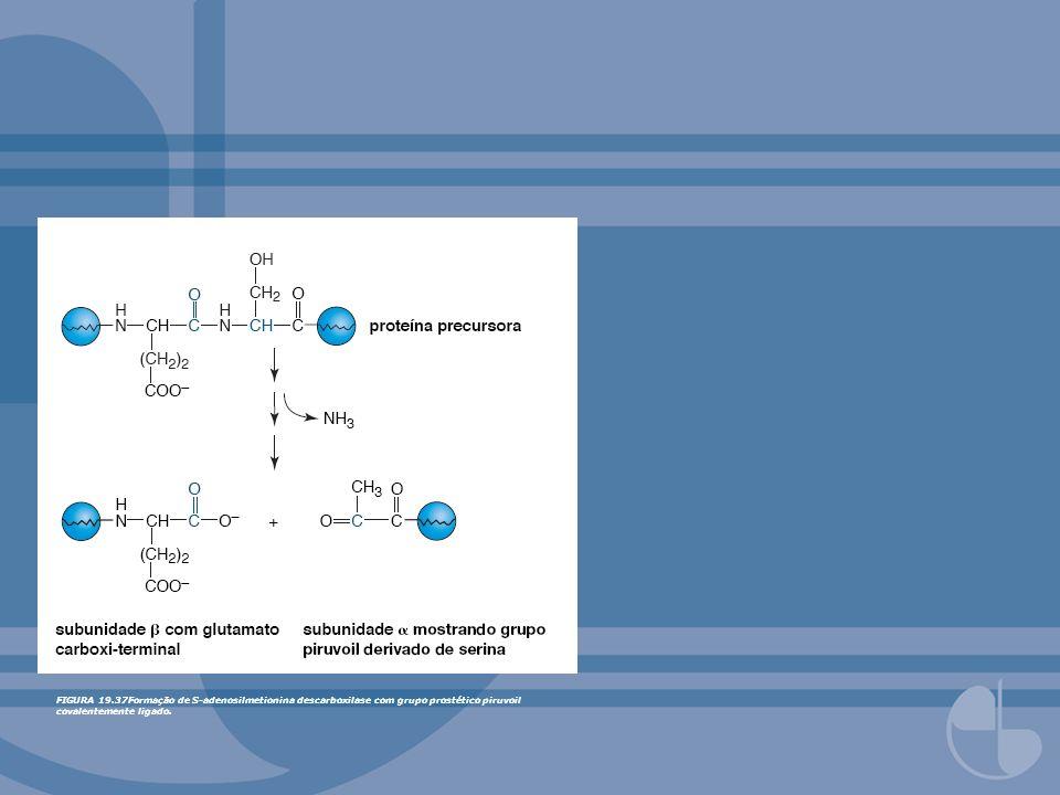FIGURA 19.37Formação de S-adenosilmetionina descarboxilase com grupo prostético piruvoil covalentemente ligado.