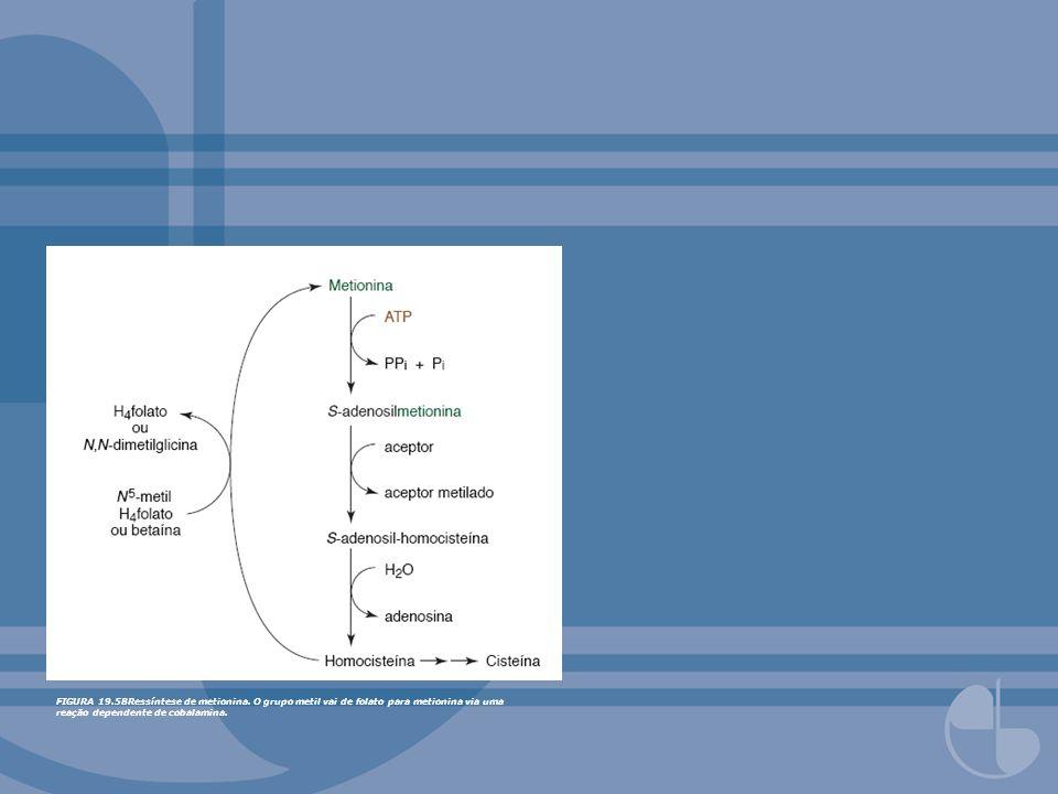 FIGURA 19. 58Ressíntese de metionina