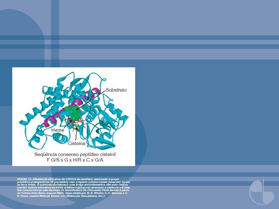 FIGURA 11.1Modelo do sítio ativo de CYP2C5 de mamífero mostrando o grupo prostético protoporfirina IX (vermelho) com o ligante cisteína tiolato (amarelo) ligado ao ferro heme.
