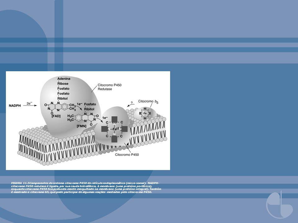 FIGURA 11.5Componentes do sistema citocromo P450 de retículo endoplasmático (micro-somal).