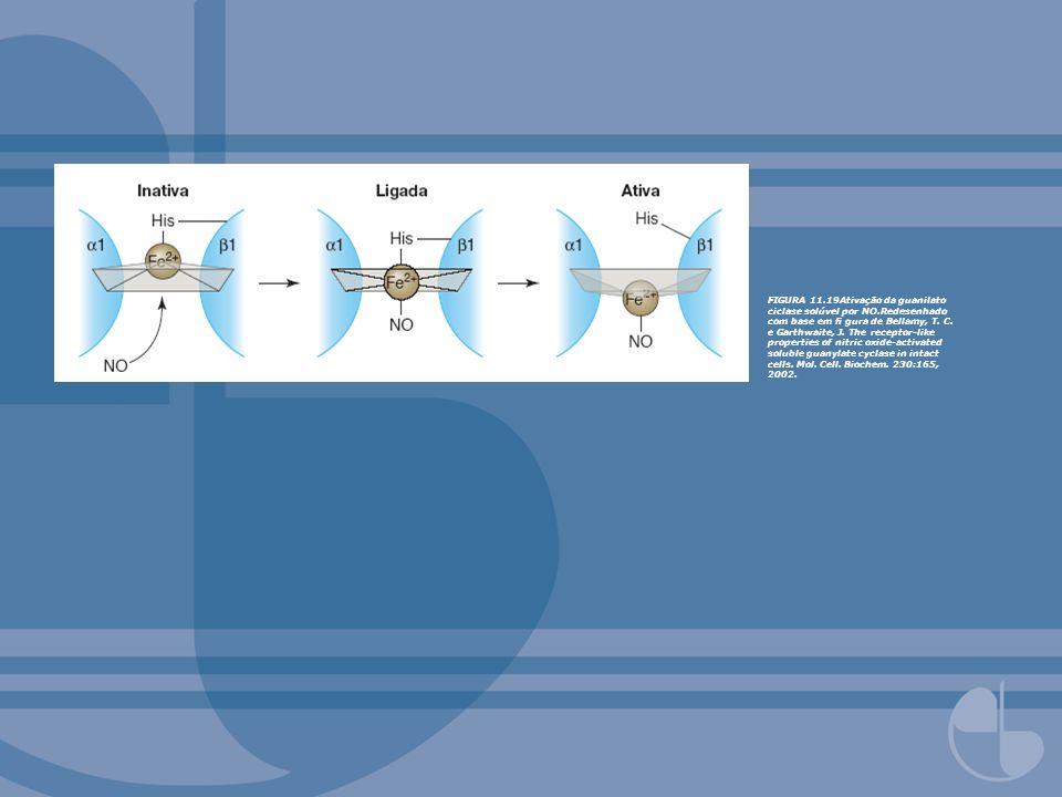 FIGURA 11. 19Ativação da guanilato ciclase solúvel por NO