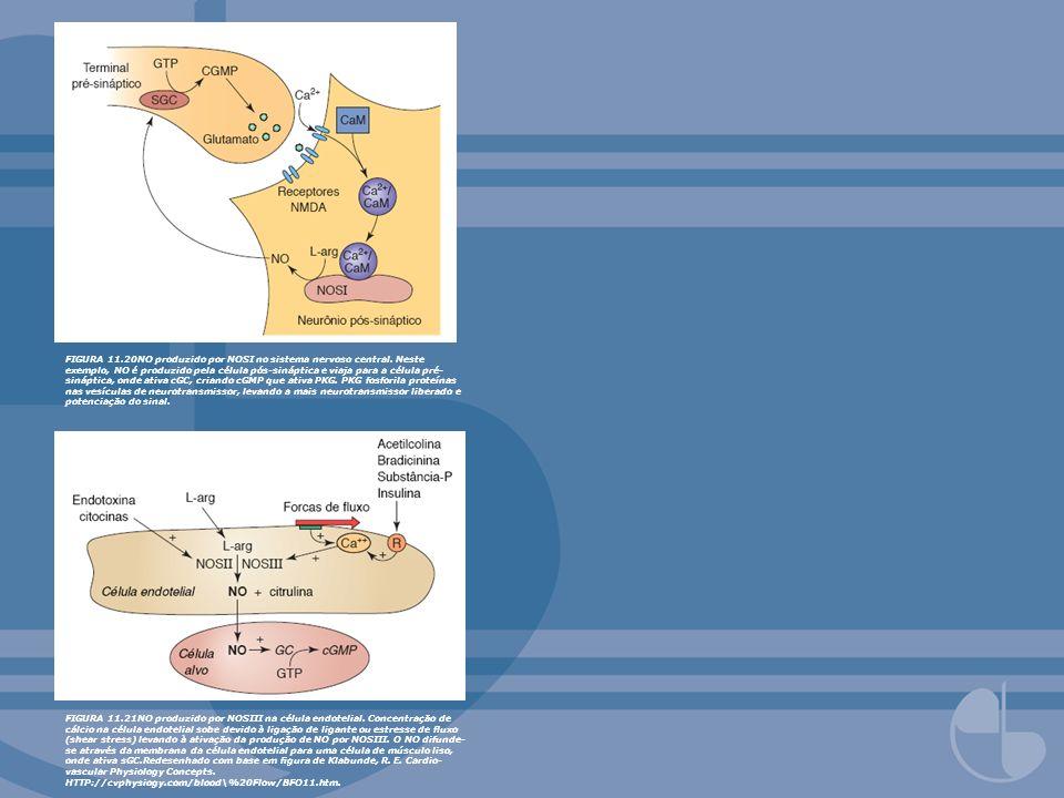 FIGURA 11. 20NO produzido por NOSI no sistema nervoso central