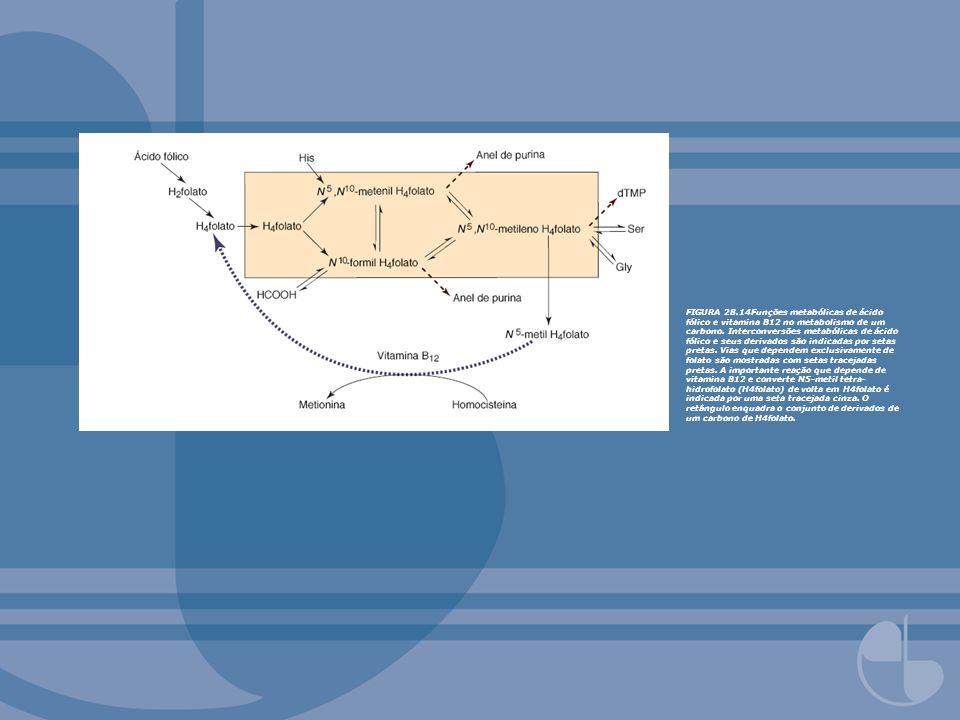 FIGURA 28.14Funções metabólicas de ácido fólico e vitamina B12 no metabolismo de um carbono.