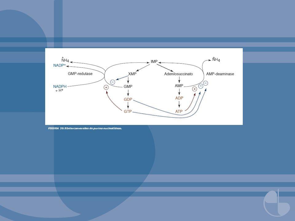 FIGURA 20.9Interconversões de purina nucleotídeos.