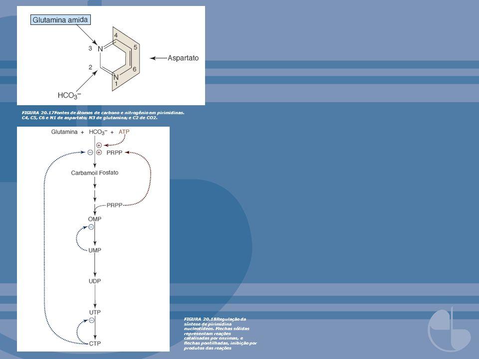 FIGURA 20. 17Fontes de átomos de carbono e nitrogênio em pirimidinas