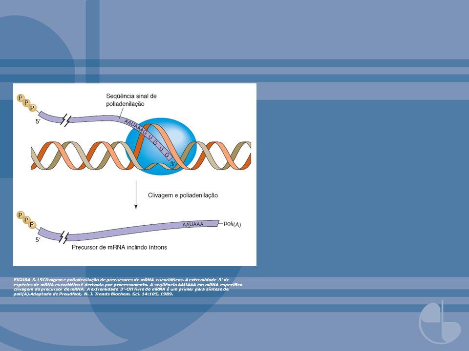 FIGURA 5.15Clivagem e poliadenilação de precursores de mRNA eucarióticos.