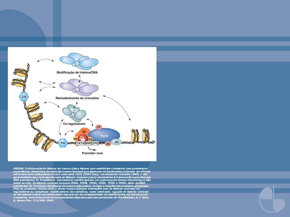 FIGURA 5.6Interação de fatores de transcrição e fatores que modificam cromatina com promotores eucarióticos.