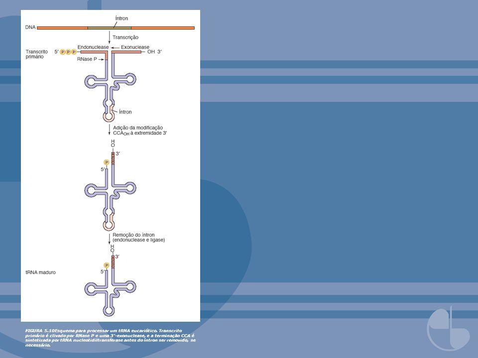 FIGURA 5. 10Esquema para processar um tRNA eucariótico