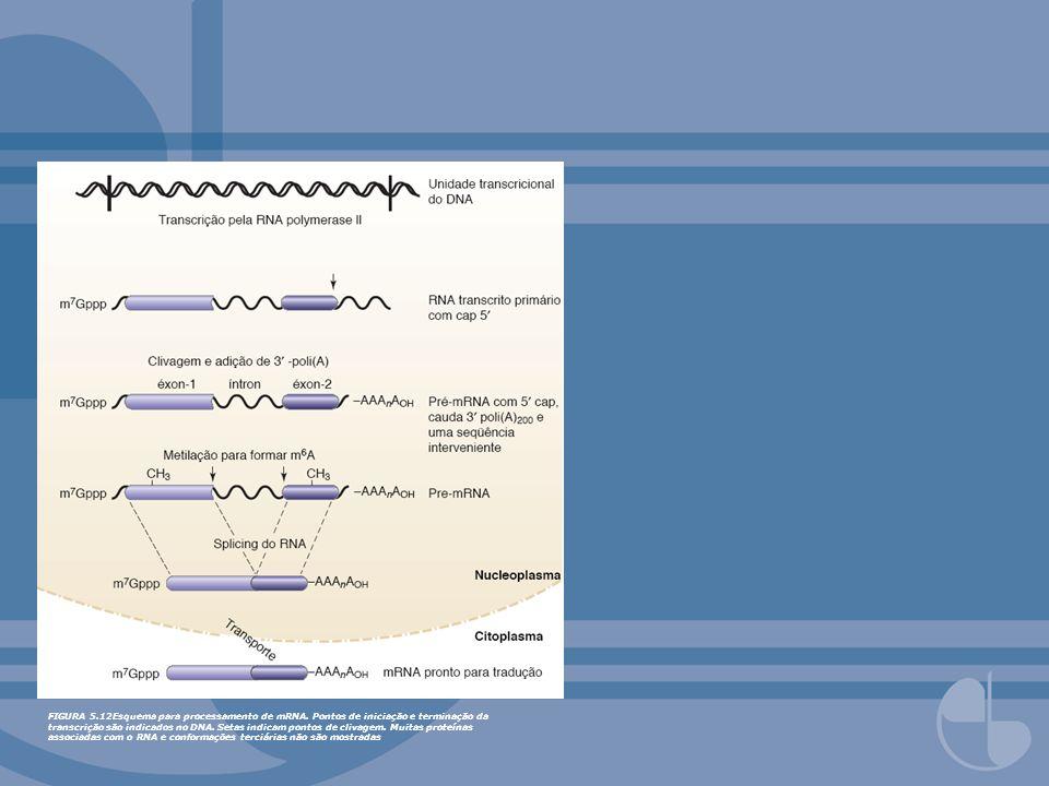 FIGURA 5. 12Esquema para processamento de mRNA