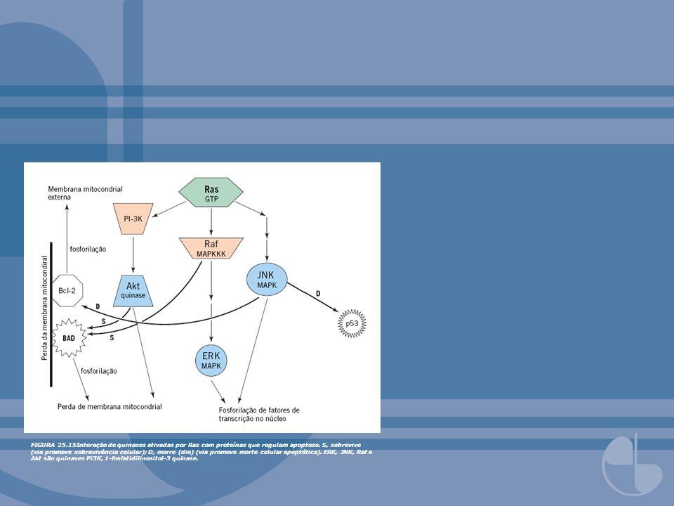FIGURA 25.15Interação de quinases ativadas por Ras com proteínas que regulam apoptose.