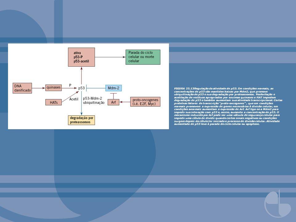 FIGURA 25. 13Regulação da atividade de p53