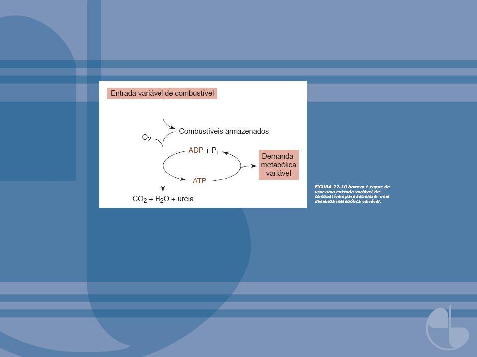 FIGURA 22.1O homem é capaz de usar uma entrada variável de combustíveis para satisfazer uma demanda metabólica variável.