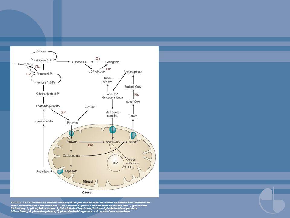 FIGURA 22.16Controle do metabolismo hepático por modificação covalente no estado bem-alimentado.